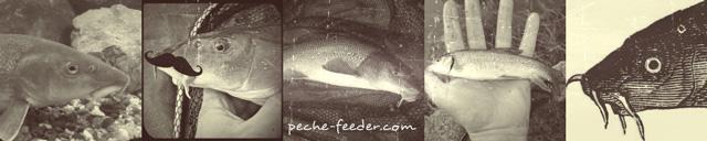 Pêche du barbeau au feeder